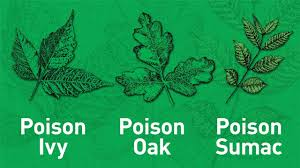 outsmarting poison ivy and other