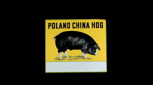 Poland China Hog DSP 48x42 | H114 | Iowa Premier 2018