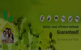 Home | Jmd Pest control ✓Pest Control in Dombivli