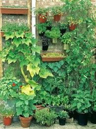 tulip garden home gardening ideas