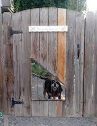 10 Dog Window In Fence Ideas Dog Window Dog Window In Fence Fence