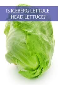 is iceberg lettuce head lettuce is