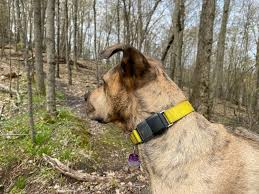 Fi Dog Collar Review A Reliable Gps Tracker For Dogs Insider