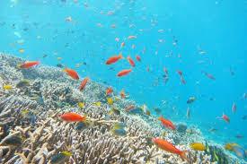 沖縄の海を、東京で再現!? 水槽の中に生態系を作る男たち | Gyoppy ...