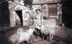 Betty Phillips with her pigs at Bokiddick Farm. 1950's. Supplied ...