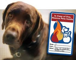 National Pet Fire Safety Day The Bark
