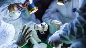 Mining coronavirus genomes for clues to the outbreak's origins ...