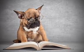 funny dog reading a book doge