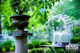 A Garden Vignette With Cloches On A Table With A Potted Boxwood On A Pedestal And A Picket Fence In Stock Photo Picture And Rights Managed Image Pic E94 2395611 Agefotostock