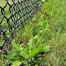 Fence Lines Turfgrass And Landscape Weed Id