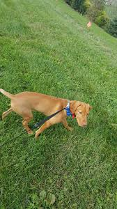 General Troubleshooting Tips From The Dog Fence Guy Dog Fence Guy Installs Invisible Type Dog And Pet Fence Systems In Lancaster York Lebanon Dauphin Chester Berks Co Pa