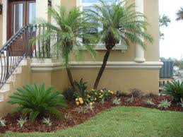 palm tree landscape design ideas modern