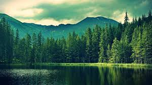pine forest hd wallpaper for mac