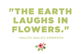 flower quotes calming thoughts on flowers reader s digest