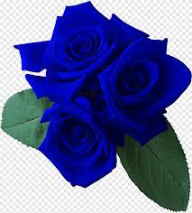 حديقة الورود باقة من الزهور أرجواني أزرق Png