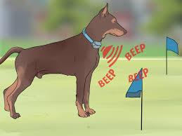 3 Ways To Install An Underground Dog Fence Wikihow