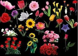 photo flower psd file free psd