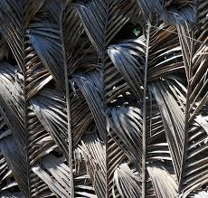 Palm Frond Fence 1 Photograph By Ron Kandt