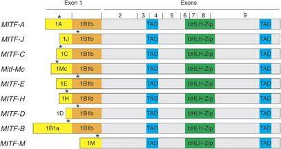 isoforms