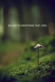 all life deserves respect and kindness found it