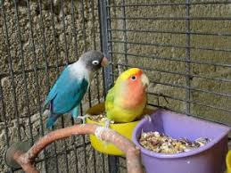 your bird s home pet birds by lafeber co