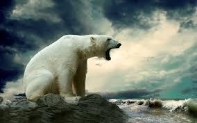 polar bear wallpaper 65 pictures