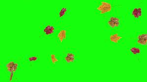 fall leaves falling on green screen
