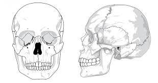 Huesos de la cabeza (cráneo): ¿cuantos hay y como se llaman?