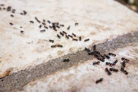 Get Ant Remove From Home  Gif
