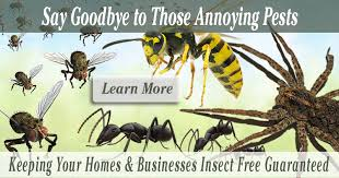 Home - Greenshield Pest Control