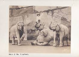 Rosalie Adele Nelson & her Circus Elephants 1929 autographed dated ...