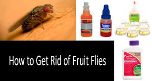 top 5 best fruit fly traps that work in