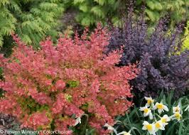 The Best Low Maintenance Plants For Your Landscape Hgtv