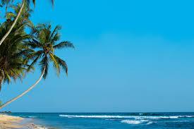 خلفية النخيل وأشجار النخيل والشاطئ والمدارية والشاطئ