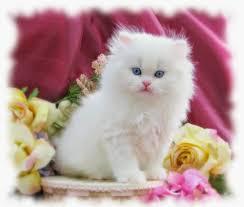 اجمل صور قطط اجمل وارق الحيوانات الاليفه القطط دلع ورد