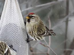 gift ideas for the bird watching dad