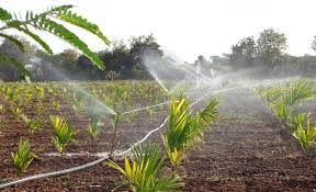 Micro-irrigation and groundwater use