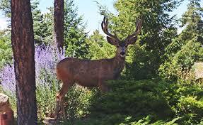 protect your garden from deer