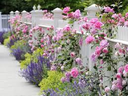 Love Roses Growing Through White Picket Fences Garden Inspiration Dream Garden Shabby Chic Garden