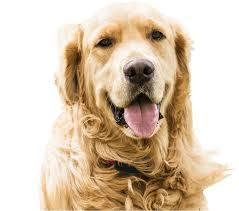 Canine Company Free Consultation