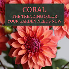 c flowers the trending color your