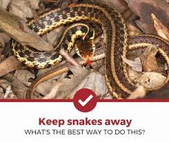 How To Keep Snakes Away A Complete Guide Pest Strategies