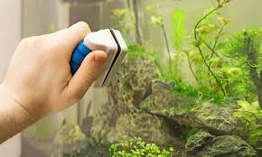 10 best aquarium magnet cleaners