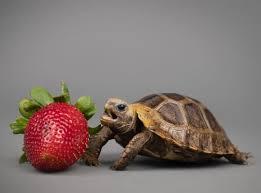 6 điều cần xem xét trước khi nuôi rùa cạn | Rùa Việt