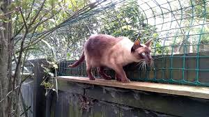 Cat Proof Fence Diy Diy Choices