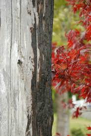 Photographer- Ivy Greene | Tree, Plants, Tree trunk