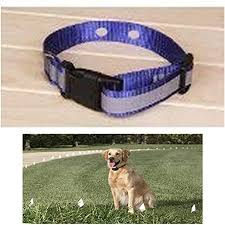 Amazon Com Sparky Pet Co Invisible Fence Compatible Reflective Blue Dog Collars 3 4 Replacement Dog Collar For Systems That Have 2 Holes 1 5 8 Apart Pet Supplies