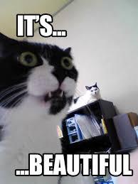 beautiful cat meme beeawag