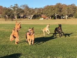 Canberra Dog Off Leash Areas Canberra Dog Walks