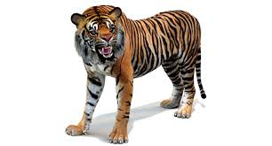 Tiger Animated 2 (Polygonal Mane) 3D Model